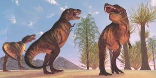Tyrannosariedinosaurievildmark Fotografering för Bildbyråer