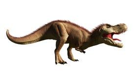 Tyrannosarierex, den T-rex dinosaurien från den Jurassic perioden 3d framför isolerat på vit bakgrund Arkivbilder