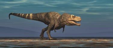 Tyrannosarierex på vit bakgrund Arkivfoto
