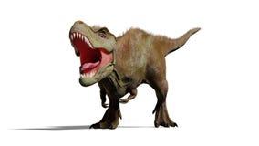 Tyrannosarierex som vrålar, illustration för T-rex dinosaurie som 3d isoleras med skugga på vit bakgrund Arkivfoto