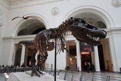 tyrannosaurus Стоковое Изображение RF