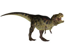 Tyrannosaurus Royalty Free Stock Photos