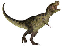 Tyrannosaurus. Illustration of a Tyrannosaurus (dinosaur species) isolated on a white background Stock Photo