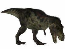 Tyrannosaurus - dinosaur 3D Images libres de droits