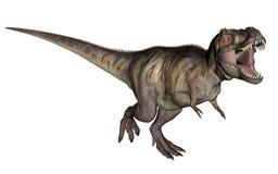 Tyrannosaurus dinosaur. Aggressive tyrannosaurus rex with open mouth in white background vector illustration