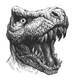 Tyrannosaurus Dinosaur . Hand drawn. Vector eps8 Stock Photography