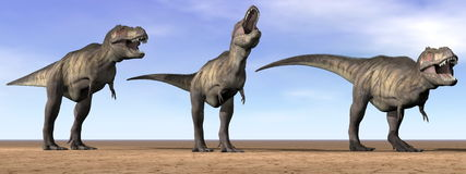 Tyrannosaurus dinosaurs in the desert - 3D render Stock Photos