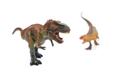 Tyrannosaurus in front of carnotaurus on white. Selective focus Royalty Free Stock Photos