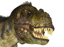 Tyrannosaurus' Head Royalty Free Stock Photo