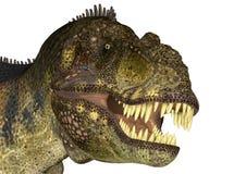 Tyrannosaurus' Head royalty free illustration