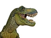 A Tyrannosaurus Hunts on a White Background Stock Photo