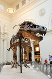 Tyrannosaurus Rex на музее поля в Чiкаго Стоковые Изображения RF