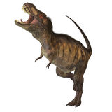 Tyrannosaurus Rex 02. Tyrannosaurus Rex was one of the largest carnivores of the Cretaceous Period of Earths history. Its fossils have been found in western Royalty Free Stock Photos