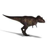 Tyrannosaurus rex Stock Photos