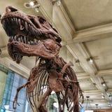 Tyrannosaurus Rex royalty-vrije stock foto