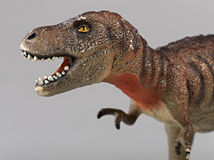 Tyrannosaurus rex. Side view on grey Stock Images