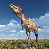 Tyrannosaurus Rex Royalty Free Stock Images