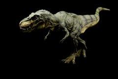 Tyrannosaurus Rex Stock Fotografie