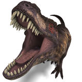 tyrannosaurus rex Стоковое Изображение