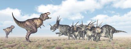 Tyrannosaurus Rex atakuje Styracosaurus ilustracji