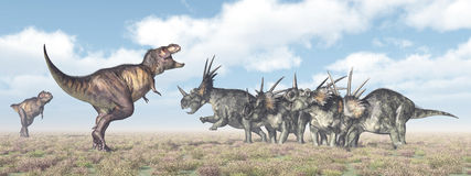 Tyrannosaurus Rex attacks Styracosaurus Royalty Free Stock Photography
