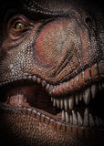 Tyrannosaurus Rex. Close Up Picture Of Tyrannosaurus Rex Royalty Free Stock Photography