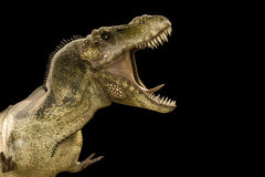 Tyrannosaurus rex. 3d illustration of a Tyrannosaurus rex  on black background Stock Photo