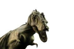 Tyrannosaurus rex. 3d illustration of a Tyrannosaurus rex  on white background Stock Images