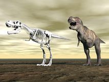 Tyrannosaurus rex - 3D render Royalty Free Stock Photo