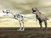 Tyrannosaurus rex - 3D render Royalty Free Stock Photo