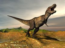 Tyrannosaurus rex dinosaur - 3D render. Tyrannosaurus rex dinosaur walking in desertic landscape by cloudy sunset Royalty Free Stock Photo