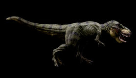Tyrannosaurus rex. Dinosaur on dark background Royalty Free Stock Image