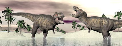 Tyrannosaurus rex dinosaur fight - 3D render. Two tyrannosaurus rex dinosaurs fighting into the water in desertic landscape Stock Image
