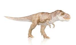 Tyrannosaurus Rex, Dinosaur isolated on white background Royalty Free Stock Photography