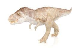 Tyrannosaurus Rex, Dinosaur isolated on white background Stock Images