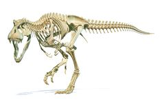Tyrannosaurus Rex dinosaur photorealistic 3d rendering of full skeleton stock illustration