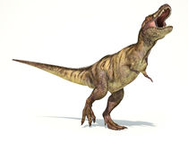 Tyrannosaurus Rex dinosaur, photorealistic representation. Dynam. Tyrannosaurus Rex dinosaur, full body photorealistic representation. Dynamic view. On white Stock Photo