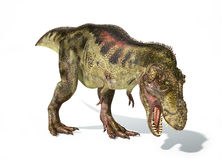 Tyrannosaurus Rex dinosaur, photorealistic representation. Dynam. Tyrannosaurus Rex dinosaur, full body photorealistic representation. Dynamic view. On white Royalty Free Stock Photos