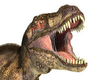 Tyrannosaurus Rex dinosaur, photorealistic representation. Head. Tyrannosaurus Rex dinosaur, photorealistic representation, Scientifically correct. Head close up Royalty Free Stock Photography