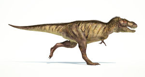 Tyrannosaurus Rex dinosaur, photorealistic representation. Side. Tyrannosaurus Rex dinosaur, full body photorealistic representation, scientifically correct Royalty Free Stock Photos