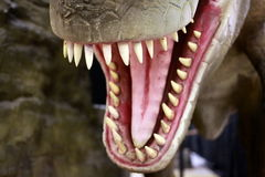 T Rex. Teeth showing mouth open in warning position Stock Photos
