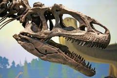 Tyrannosaurus Rex dinosaura głowa Zdjęcie Royalty Free