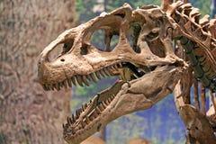 Tyrannosaurus Rex dinosaura głowa Fotografia Royalty Free