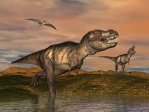 Tyrannosaurus rex dinosaurs - 3D render. Two tyrannosaurus rex dinosaurs walking with pteranodon birds flying upon in desertic landscape by cloudy sunset Stock Images