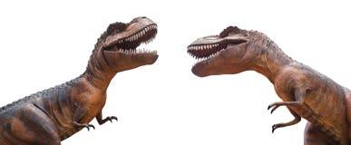 Tyrannosaurus rex are fighting . Isolated background Stock Photo