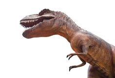 Tyrannosaurus rex is fighting . Isolated background Stock Photo