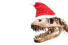 Tyrannosaurus Rex head with blank thought ballon on white isolated background with copyspace. stock image