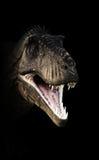 A Tyrannosaurus Rex head piercing through the darkness. Stock Photos