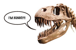 Tyrannosaurus Rex head with thought ballon with the word I´m Hungry!! on white isolated background with copyspace. Stock Image