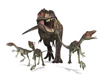 Tyrannosaurus Rex on the Hunt. A tyrannosaurus rex chases three small compsognathus dinosaurs - 3D render Royalty Free Stock Image